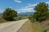 Pines on the background of the summer landscape of Crimean mountains