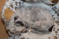 Lieblingsschlafplatz des kleinen Hundes