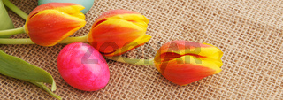 Spring tulips with colorful easter eggs.