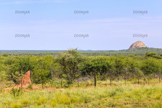 Termitenhügel in Namibia, termite mound in Namibia
