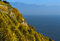 Terrassierte Steillagen im Weinanbaugebiet Lavaux über dem Genfersee