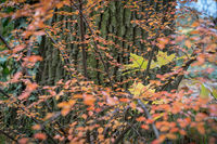 autumn leaves in front of a tree trunk
