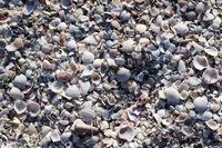 Natural background of broken seashells on beach