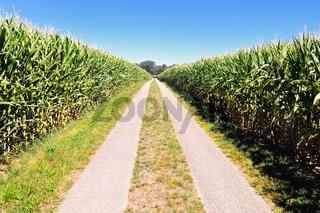 Strasse durch den Mais.jpg