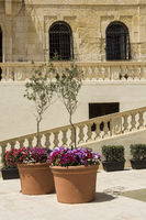 Fresh flowers and olive trees
