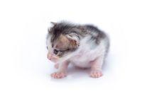 Cute little kitten isolated on white.