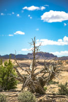 Dead tree with dramatic lighting in front of desert views