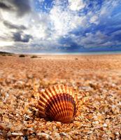 Seashell on sand beach
