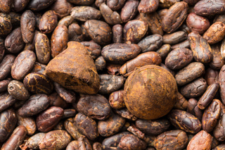 Sweet chocolate truffles on cocoa beans.