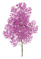 red lapacho tree isolated on white background. 3d illustration