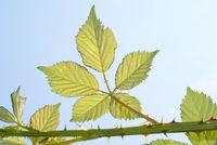 Blätter im Frühling