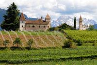 Weinberg Südtirol