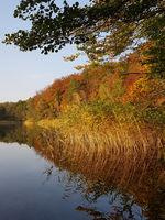 Schilf am Seeufer im Herbst bei Sonnenuntergang