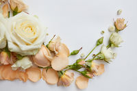 Roses on white background