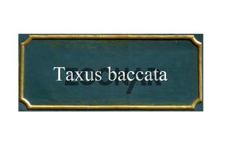 schild Eibe,Taxus baccata
