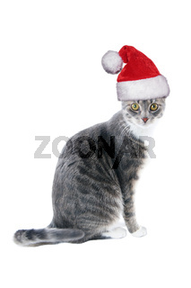 tabby cat wearing santa hat for christmas