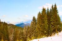 Winter landscape. Carpatians mountains