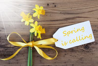 Sunny Narcissus, Label, Text Spring Is Calling
