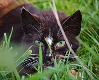 Katze im Gras versteck