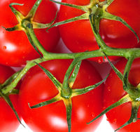 Bunch of fresh tomatoes with water drops