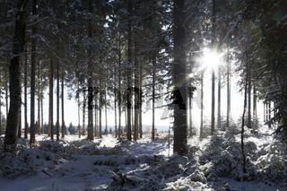 Winterwald im Gegenlicht