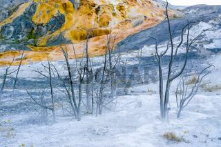 Yellowstone Norris Geyser Basin Museum submerged trees