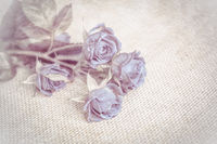 Beautiful rose soft blue flower blossom vintage grunge background. Greeting card template. Shallow depth. Soft beige toned. Paper texture
