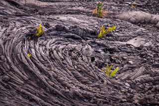 Closeup of cold lava pattern with plants