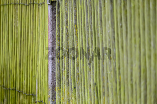 Moss on wooden fence