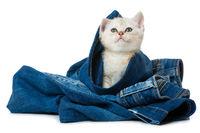 Kätzchen in Jeans