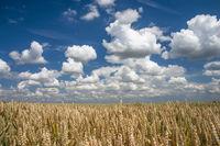 Getreidefeld und Wolkenhimmel