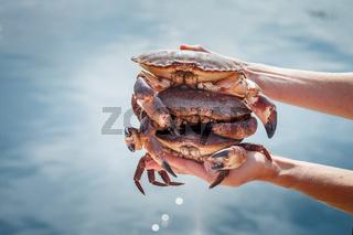 Three crabs