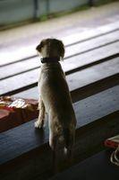 Niedlicher Hund schaut Fußball