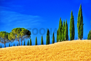 Landscape view of Val d'Orcia