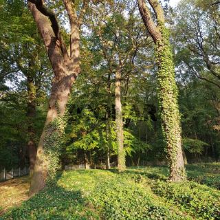 Begräbnisstätte für Kriegsopfer in der Schönholzer Heide in Berlin-Pankow