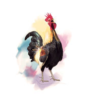 Crowing Rooster watercolor