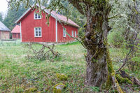 Farmstead with garden in the forest