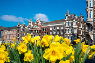 Yellow tulip flowers and Dutch houses on background, Amsterdam, Netherlands.