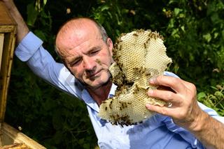 Wildbau im Bienenstock
