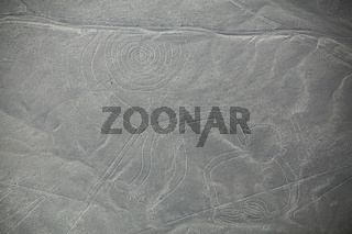 Aerial view of Nazca Lines - Monkey geoglyph, Peru.