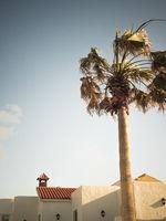 Weiße Gebäude und Palmen im Sommer mit blauem Himmel, Fuerteventura