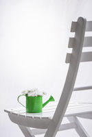 Daisies in watering can on a chair and white curtains