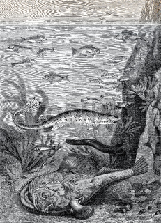 Fishes in the sea on the shore
