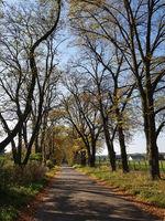 Landstraße in Brandenburg im Herbst