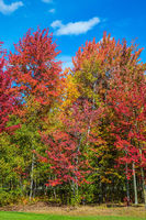 Golden autumn in Canada