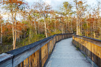 Boardwalk in Everglades