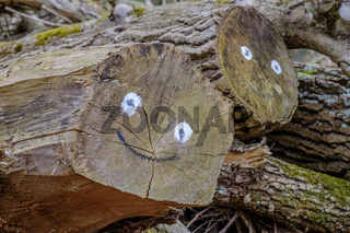 Smiling face on logs