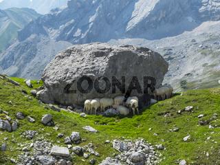 Alpine Schafe im wetterstein