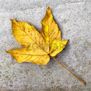 Autumn leaf on cement background