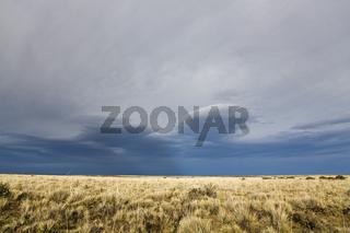 Steppenlandschaft, Patagonien, Arentinien, Suedamerika, Grassland landscape at Argentina, Patagonia, South America